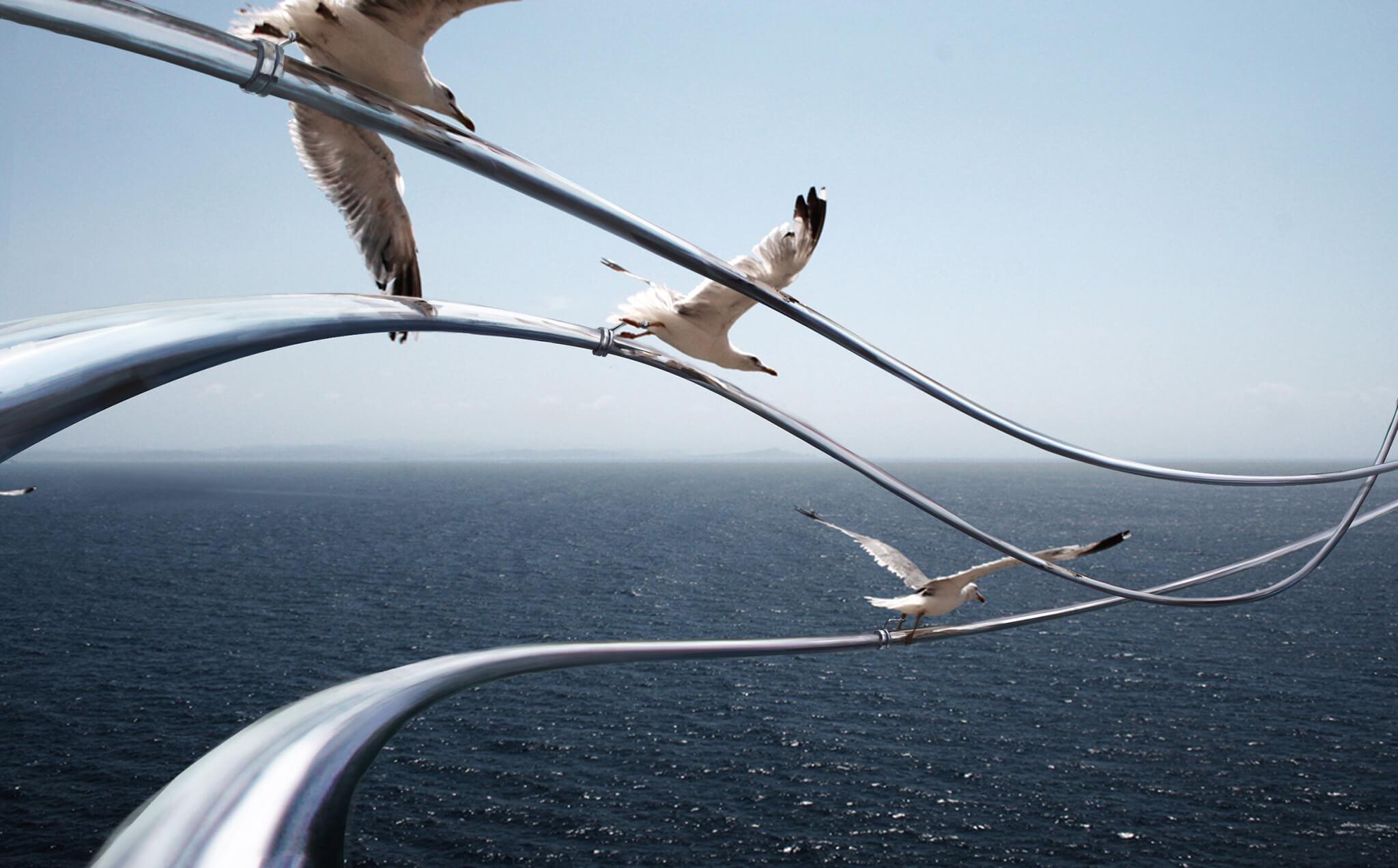 rails_seagulls001